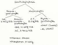 Tafelbild - Gesellschaftsformen (Überblick)